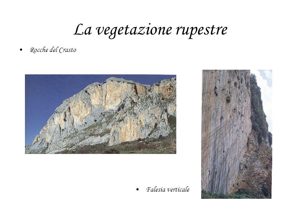 La vegetazione rupestre Rocche del Crasto Falesia verticale