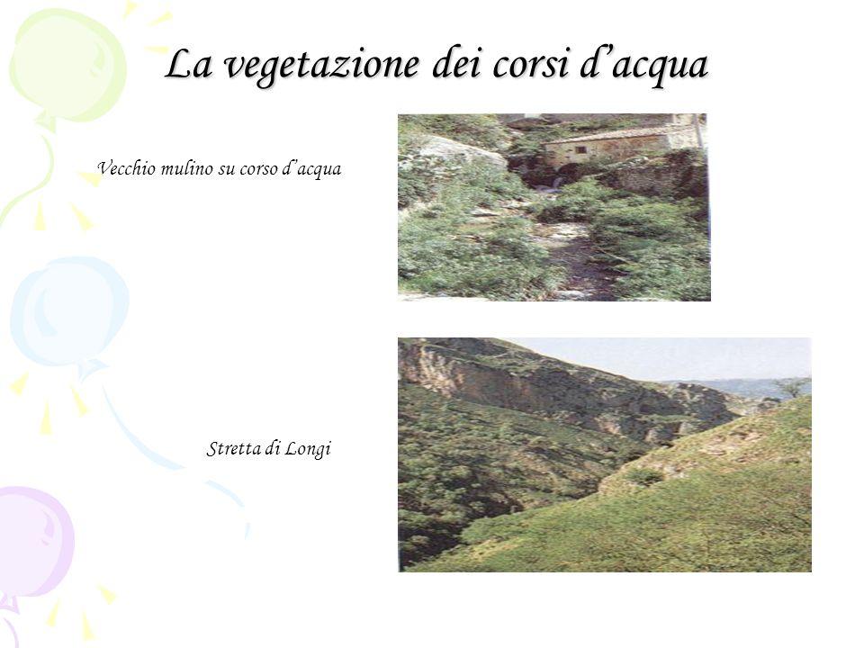 La vegetazione dei corsi dacqua Vecchio mulino su corso dacqua Stretta di Longi