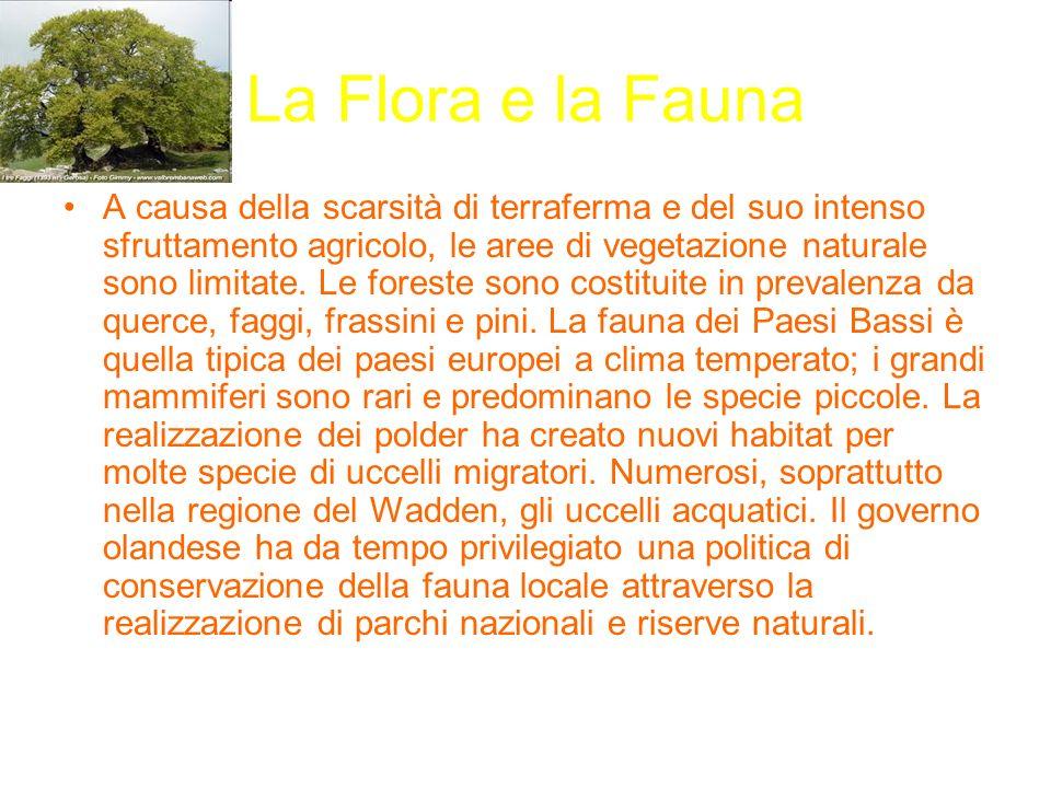 La Flora e la Fauna A causa della scarsità di terraferma e del suo intenso sfruttamento agricolo, le aree di vegetazione naturale sono limitate. Le fo