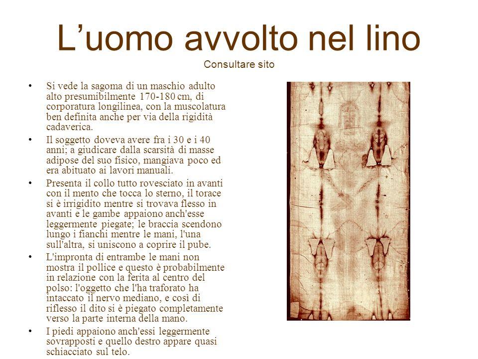 Luomo avvolto nel lino Consultare sito Si vede la sagoma di un maschio adulto alto presumibilmente 170-180 cm, di corporatura longilinea, con la musco