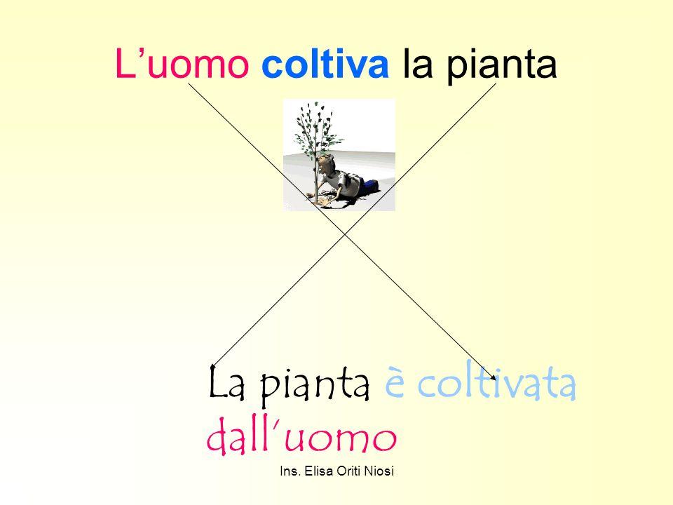 Ins. Elisa Oriti Niosi Luomo coltiva la pianta La pianta è coltivata dalluomo