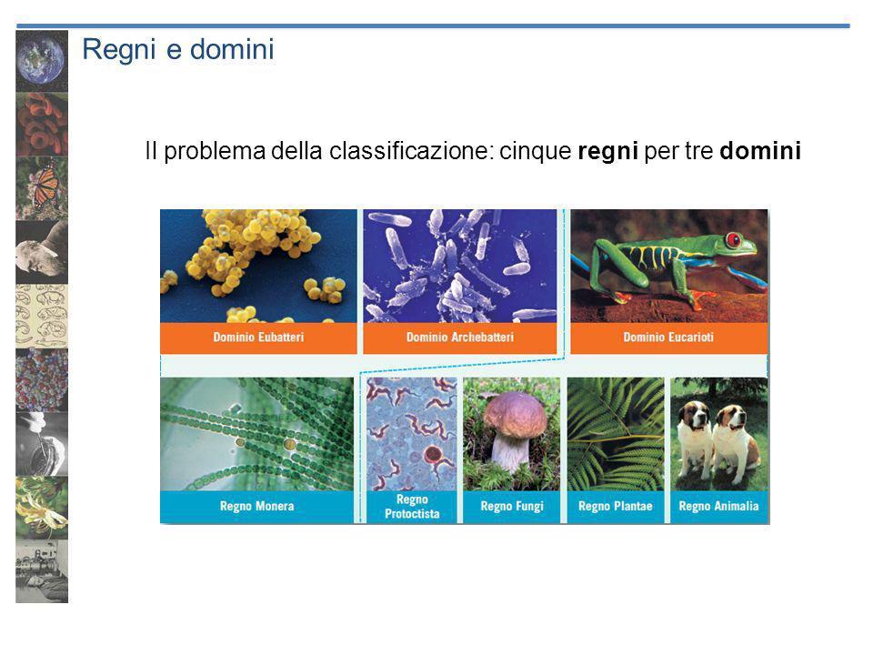 Regni e domini Il problema della classificazione: cinque regni per tre domini