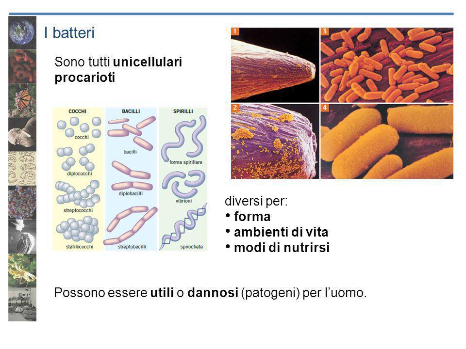 I batteri Sono tutti unicellulari procarioti Possono essere utili o dannosi (patogeni) per luomo. diversi per: forma ambienti di vita modi di nutrirsi