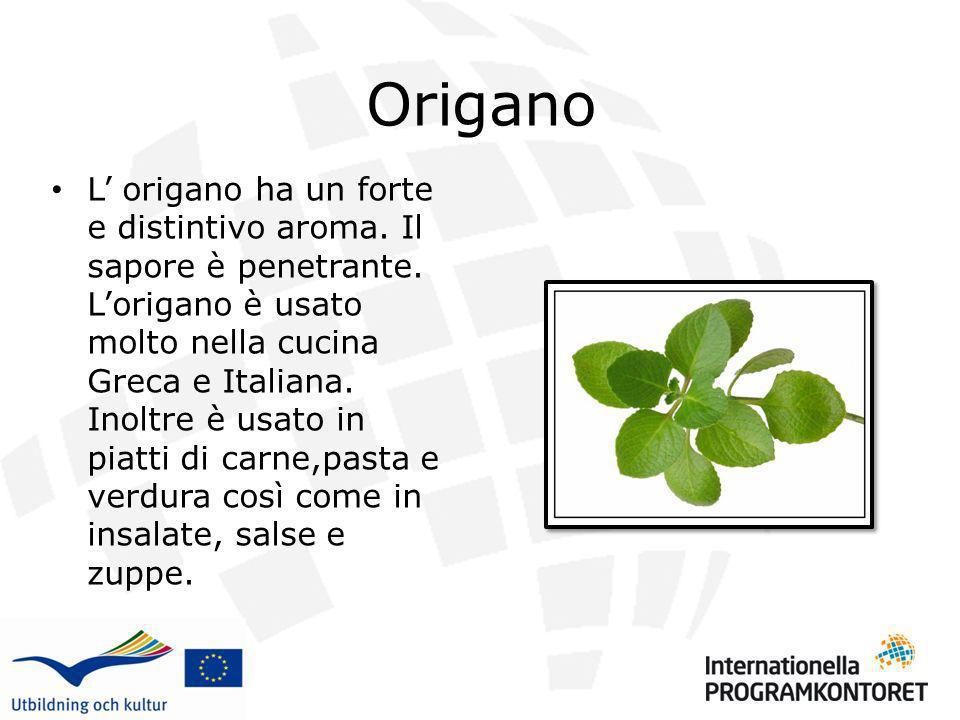Origano L origano ha un forte e distintivo aroma. Il sapore è penetrante. Lorigano è usato molto nella cucina Greca e Italiana. Inoltre è usato in pia