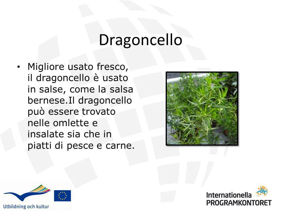 Dragoncello Migliore usato fresco, il dragoncello è usato in salse, come la salsa bernese.Il dragoncello può essere trovato nelle omlette e insalate s