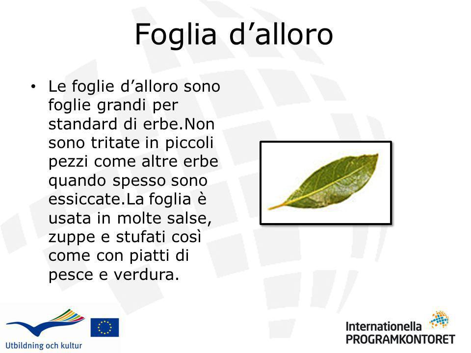 Foglia dalloro Le foglie dalloro sono foglie grandi per standard di erbe.Non sono tritate in piccoli pezzi come altre erbe quando spesso sono essiccat