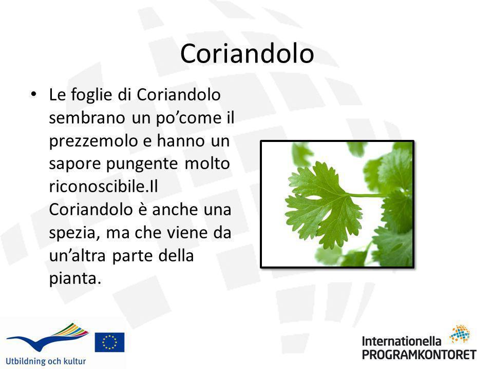 Coriandolo Le foglie di Coriandolo sembrano un pocome il prezzemolo e hanno un sapore pungente molto riconoscibile.Il Coriandolo è anche una spezia, m