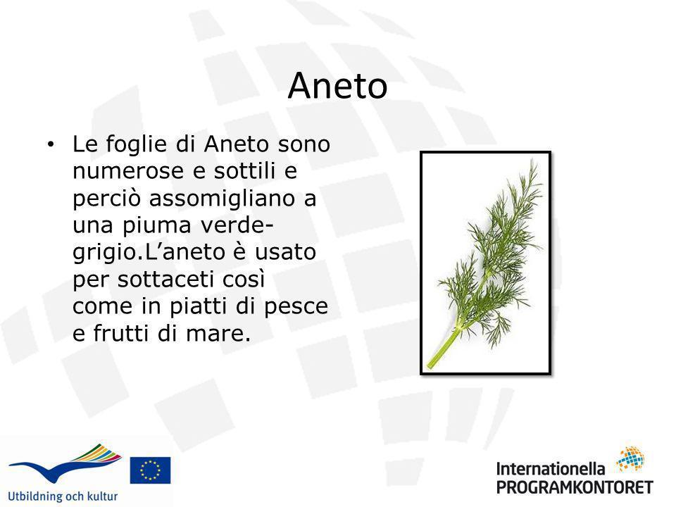 Aneto Le foglie di Aneto sono numerose e sottili e perciò assomigliano a una piuma verde- grigio.Laneto è usato per sottaceti così come in piatti di p