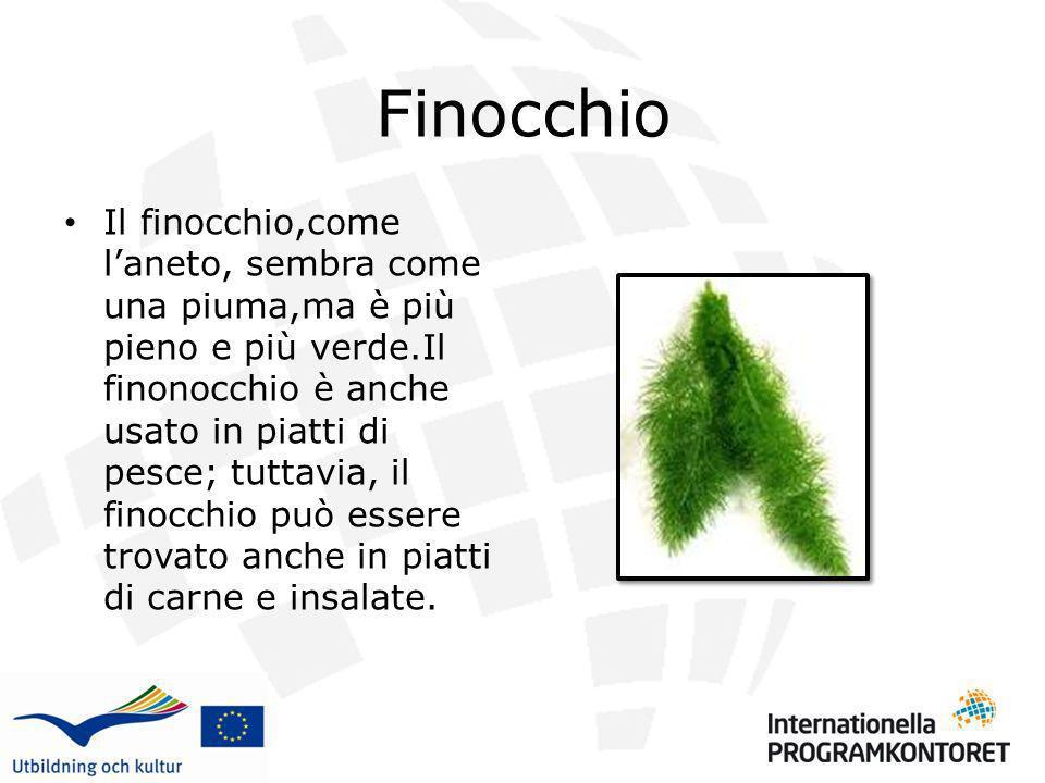 Finocchio Il finocchio,come laneto, sembra come una piuma,ma è più pieno e più verde.Il finonocchio è anche usato in piatti di pesce; tuttavia, il fin