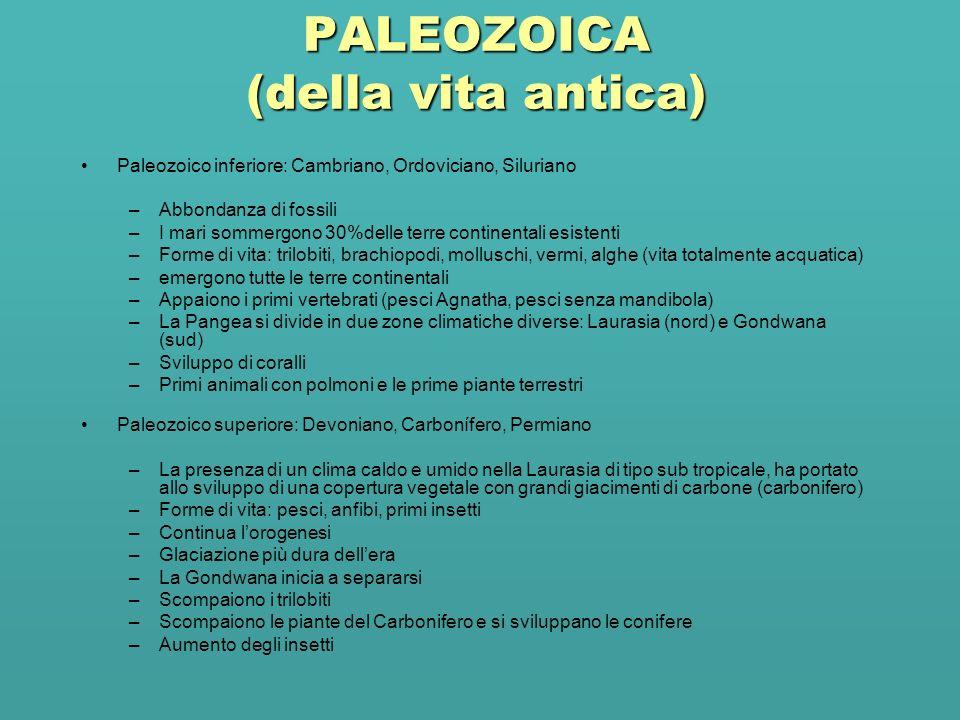 PALEOZOICA (della vita antica) Paleozoico inferiore: Cambriano, Ordoviciano, Siluriano –Abbondanza di fossili –I mari sommergono 30%delle terre contin