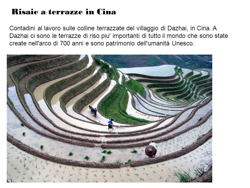 Risaie a terrazze in Cina Contadini al lavoro sulle colline terrazzate del villaggio di Dazhai, in Cina. A Dazhai ci sono le terrazze di riso piu' imp