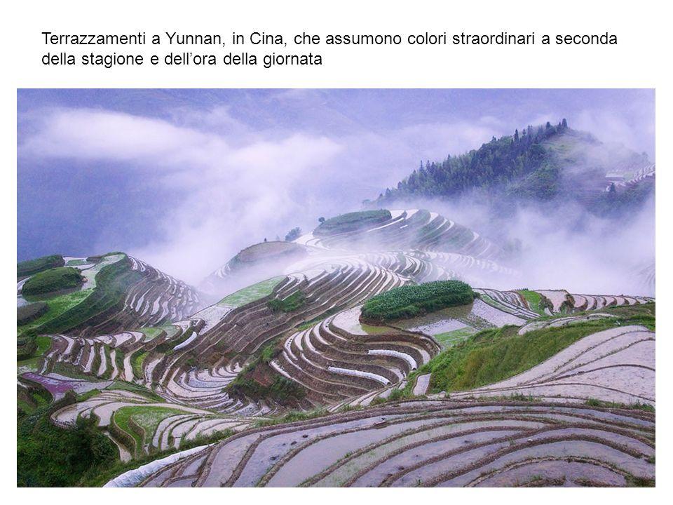 Terrazzamenti a Yunnan, in Cina, che assumono colori straordinari a seconda della stagione e dellora della giornata