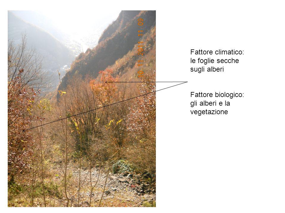Fattore climatico: le foglie secche sugli alberi Fattore biologico: gli alberi e la vegetazione
