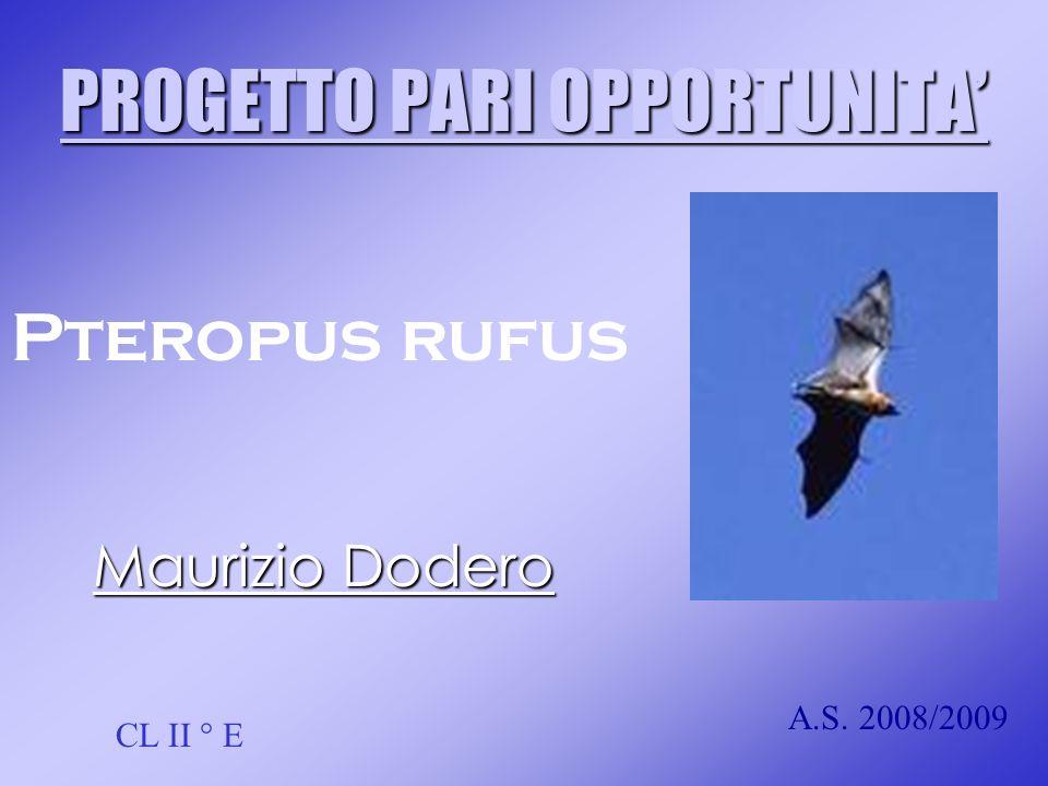 PROGETTO PARI OPPORTUNITA Maurizio Dodero CL II ° E A.S. 2008/2009 Pteropus rufus
