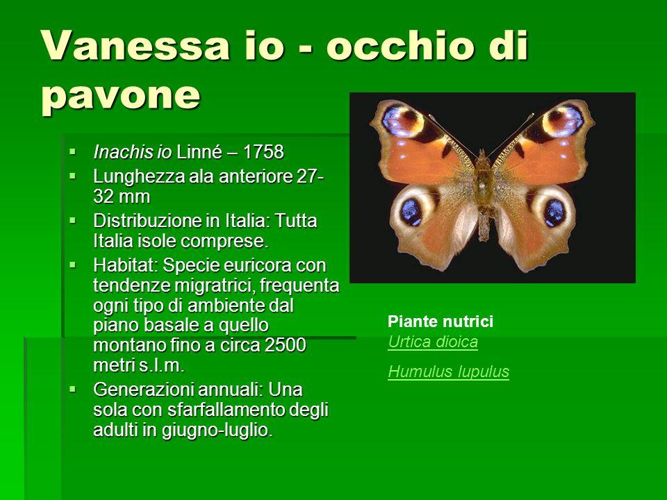 Vanessa io - occhio di pavone Inachis io Linné – 1758 Inachis io Linné – 1758 Lunghezza ala anteriore 27- 32 mm Lunghezza ala anteriore 27- 32 mm Dist