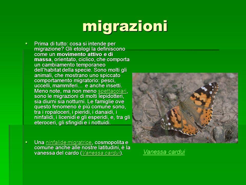 migrazioni Prima di tutto: cosa si intende per migrazione? Gli etologi la definiscono come un movimento attivo e di massa, orientato, ciclico, che com