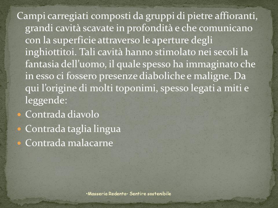 In tempi lontani la Puglia era densa di boschi e di vegetazione spontanea, ma lazione modificatrice delluomo contribuì e non poco alla graduale scomparsa degli uni e dellaltra.