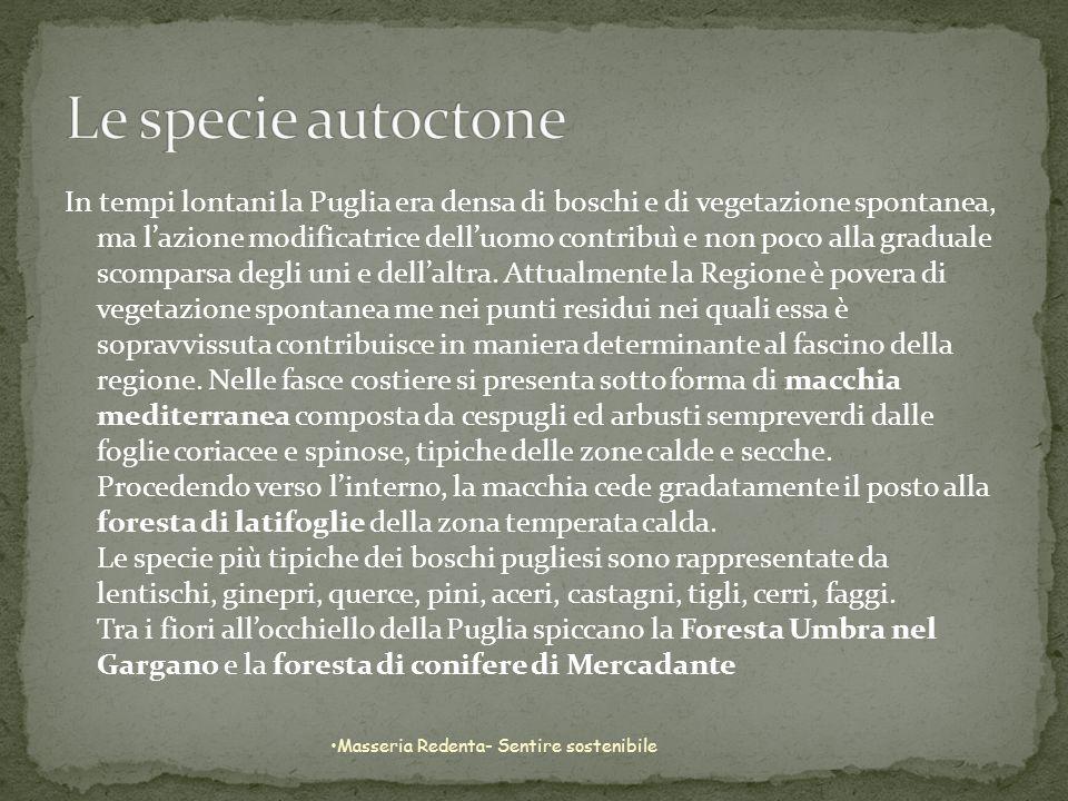 In tempi lontani la Puglia era densa di boschi e di vegetazione spontanea, ma lazione modificatrice delluomo contribuì e non poco alla graduale scompa