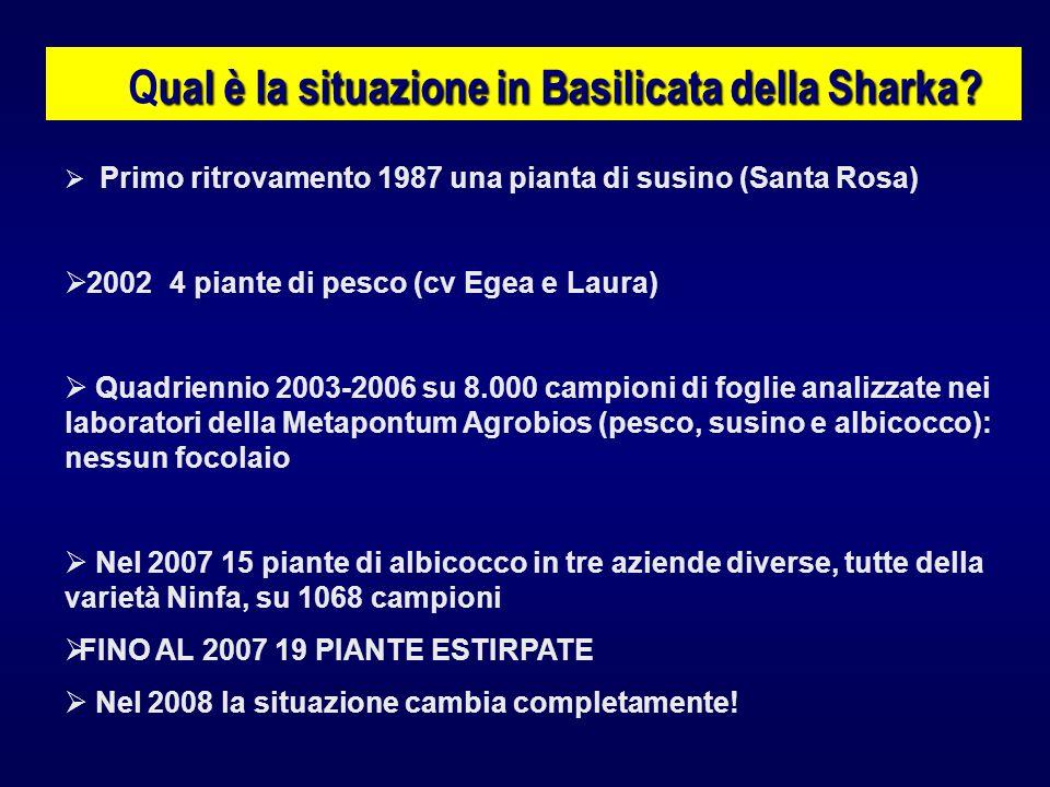 Primo ritrovamento 1987 una pianta di susino (Santa Rosa) 2002 4 piante di pesco (cv Egea e Laura) Quadriennio 2003-2006 su 8.000 campioni di foglie a