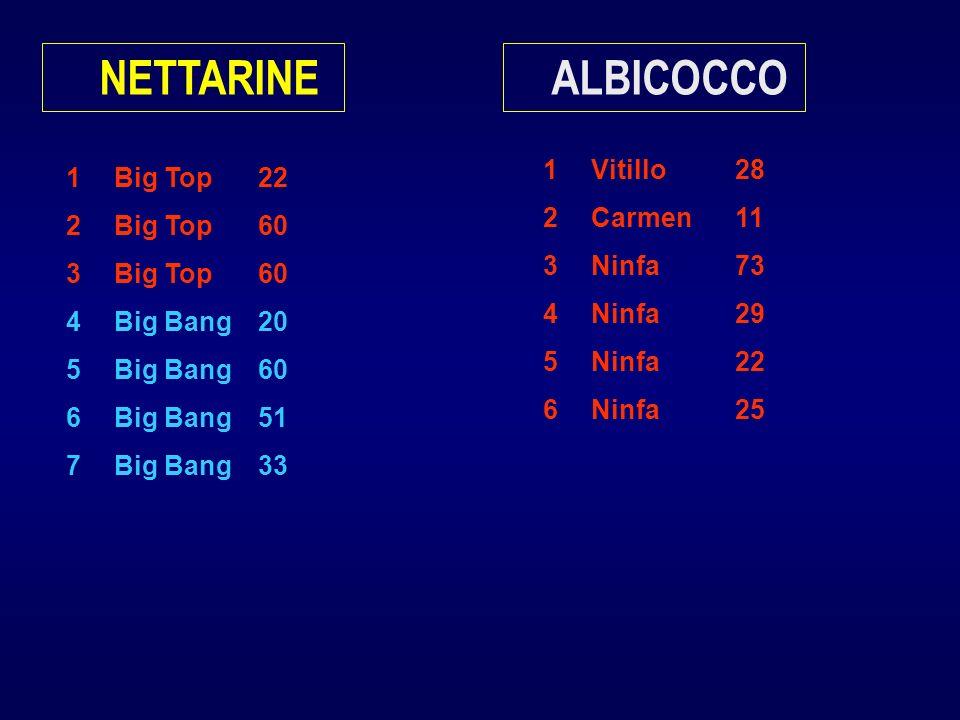 1Big Top22 2Big Top60 3Big Top60 4Big Bang20 5Big Bang60 6Big Bang51 7Big Bang33 NETTARINE 1Vitillo28 2Carmen11 3Ninfa73 4Ninfa29 5Ninfa22 6Ninfa25 AL