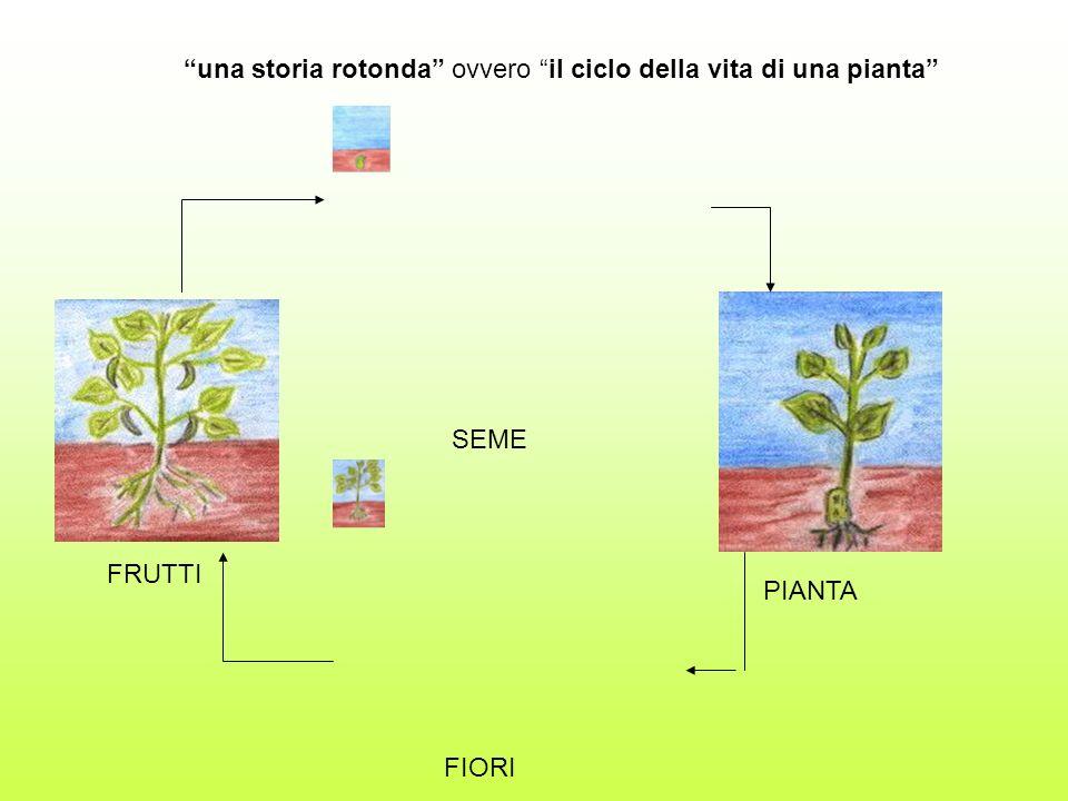 una storia rotonda ovvero il ciclo della vita di una pianta SEME PIANTA FIORI FRUTTI