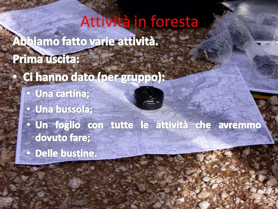 Attività in foresta