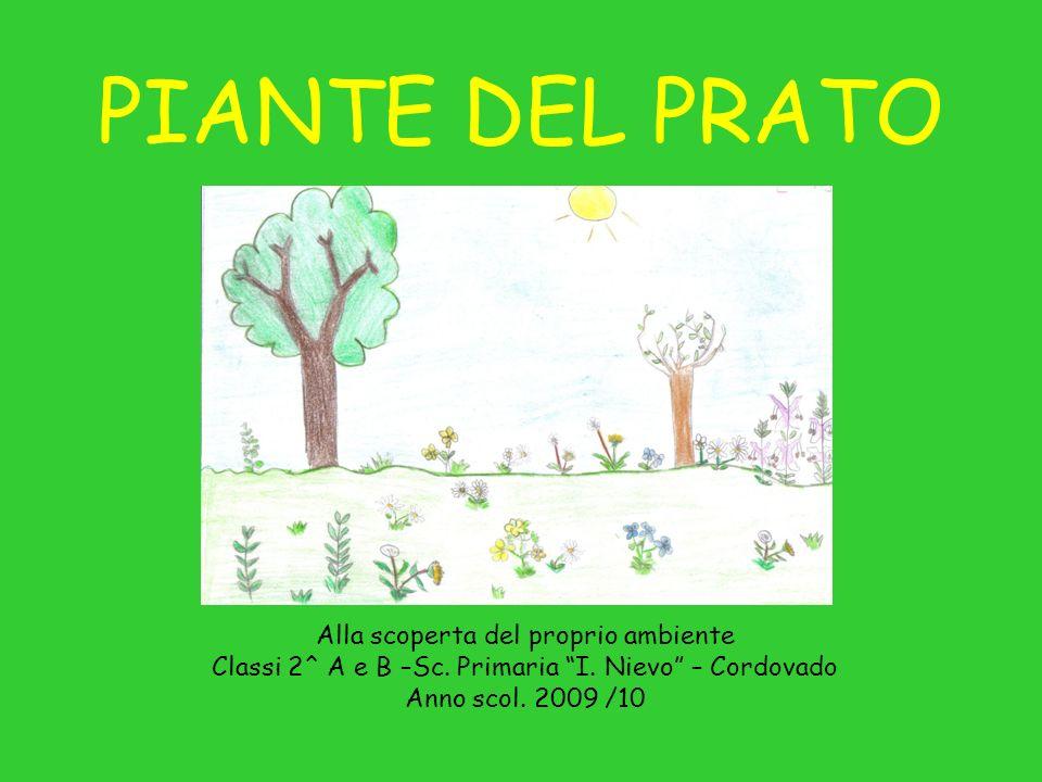 PIANTE DEL PRATO Alla scoperta del proprio ambiente Classi 2^ A e B –Sc. Primaria I. Nievo – Cordovado Anno scol. 2009 /10