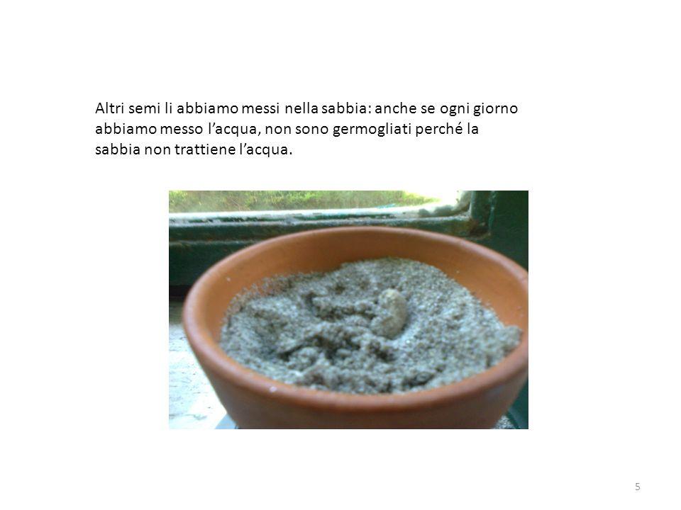 Altri semi li abbiamo messi nella sabbia: anche se ogni giorno abbiamo messo lacqua, non sono germogliati perché la sabbia non trattiene lacqua. 5