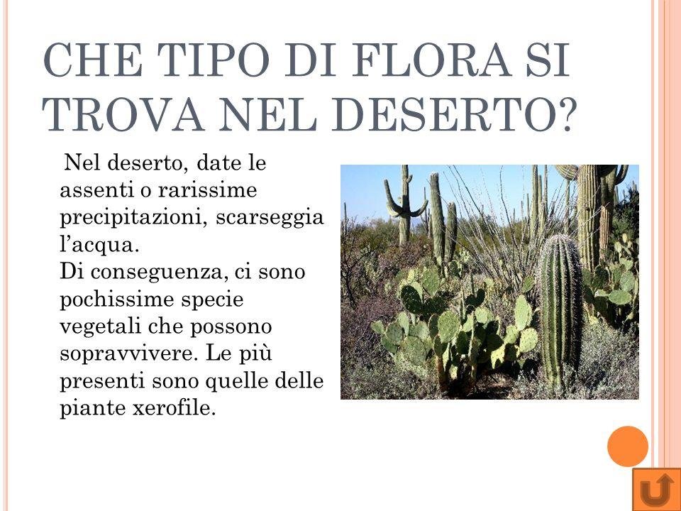 CHE TIPO DI FLORA SI TROVA NEL DESERTO? Nel deserto, date le assenti o rarissime precipitazioni, scarseggia lacqua. Di conseguenza, ci sono pochissime