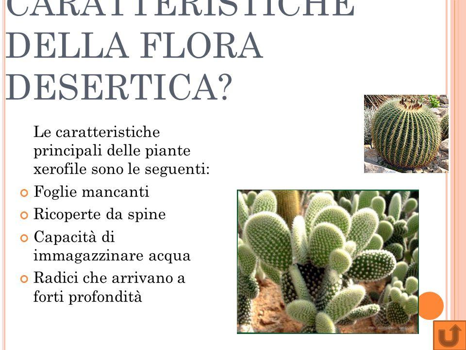 QUALI SONO LE CARATTERISTICHE DELLA FLORA DESERTICA? Le caratteristiche principali delle piante xerofile sono le seguenti: Foglie mancanti Ricoperte d