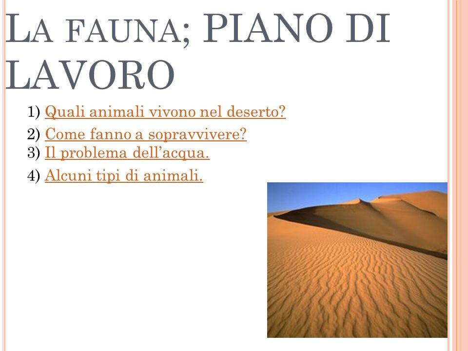 L A FAUNA ; PIANO DI LAVORO 1) Quali animali vivono nel deserto?Quali animali vivono nel deserto? 2) Come fanno a sopravvivere? 3) Il problema dellacq