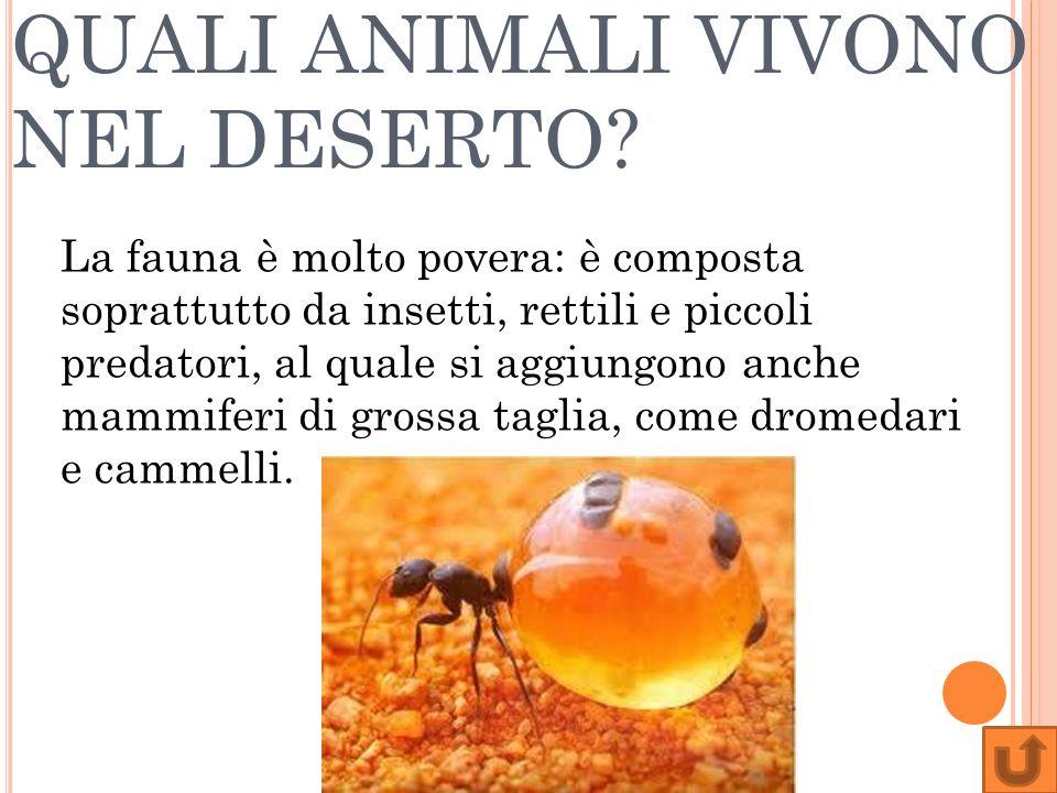 QUALI ANIMALI VIVONO NEL DESERTO? La fauna è molto povera: è composta soprattutto da insetti, rettili e piccoli predatori, al quale si aggiungono anch