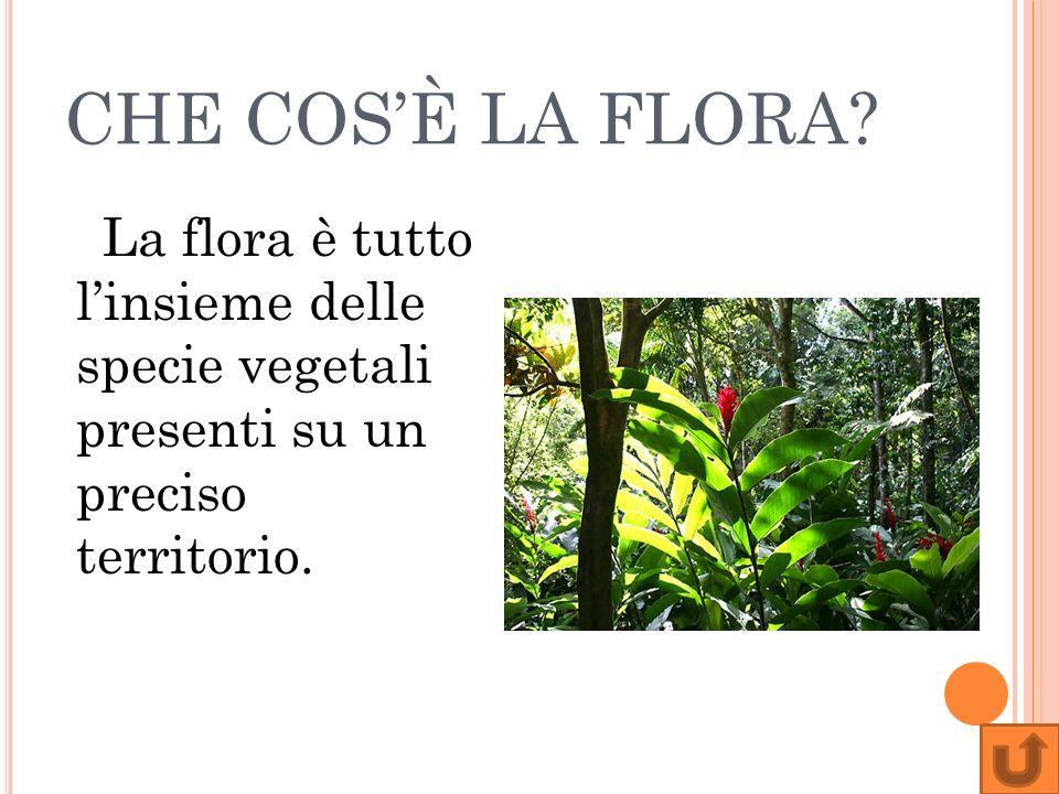 CHE TIPO DI FLORA SI TROVA NEL DESERTO.