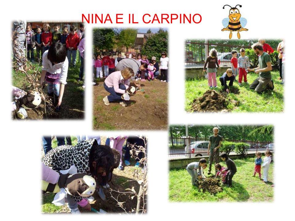 NINA E IL CARPINO