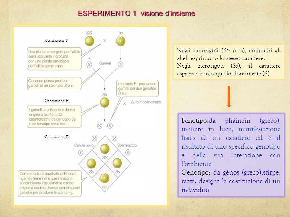 Il quadrato di Punnett Il quadrato di Punnett è un diagramma ideato dal genetista britannico Punnett utilizzato per determinare la probabilità con cui