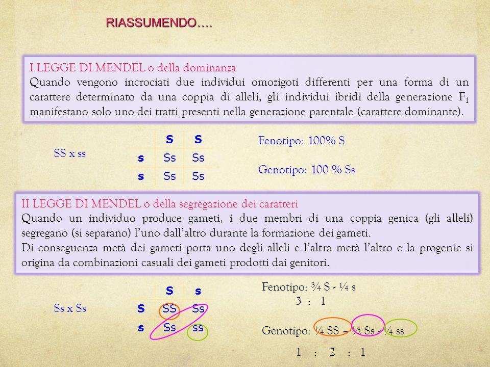 ESPERIMENTO 1 visione dinsieme Negli omozigoti (SS o ss), entrambi gli alleli esprimono lo stesso carattere. Negli eterozigoti (Ss), il carattere espr