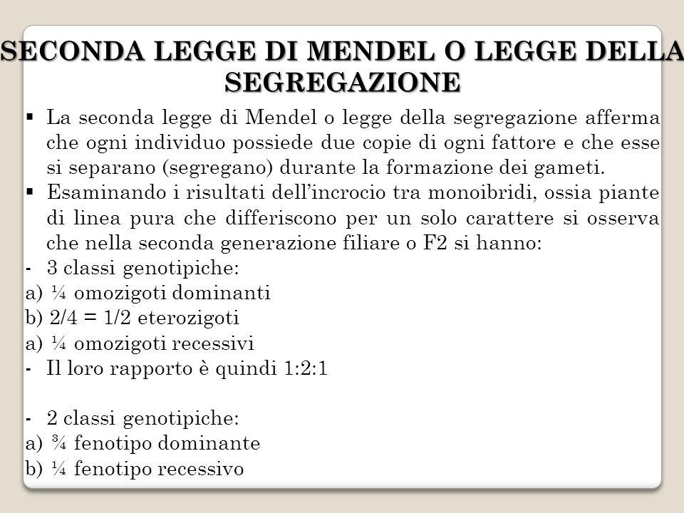 SECONDA LEGGE DI MENDEL O LEGGE DELLA SEGREGAZIONE La seconda legge di Mendel o legge della segregazione afferma che ogni individuo possiede due copie
