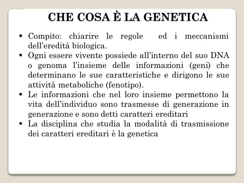 CHE COSA È LA GENETICA Compito: chiarire le regole ed i meccanismi delleredità biologica. Ogni essere vivente possiede allinterno del suo DNA o genoma