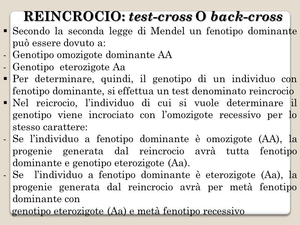 REINCROCIO: test-cross O back-cross Secondo la seconda legge di Mendel un fenotipo dominante può essere dovuto a: -Genotipo omozigote dominante AA -Ge