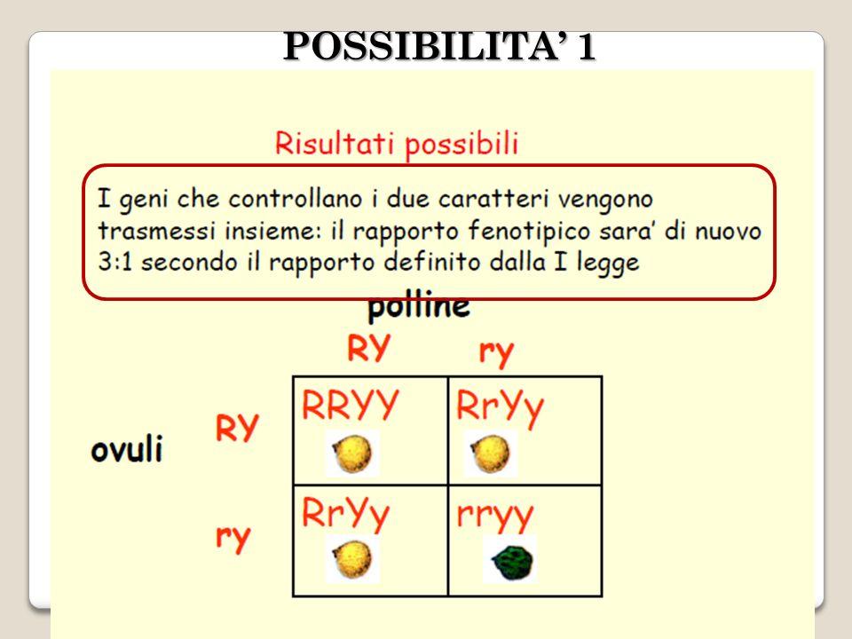 POSSIBILITA 1
