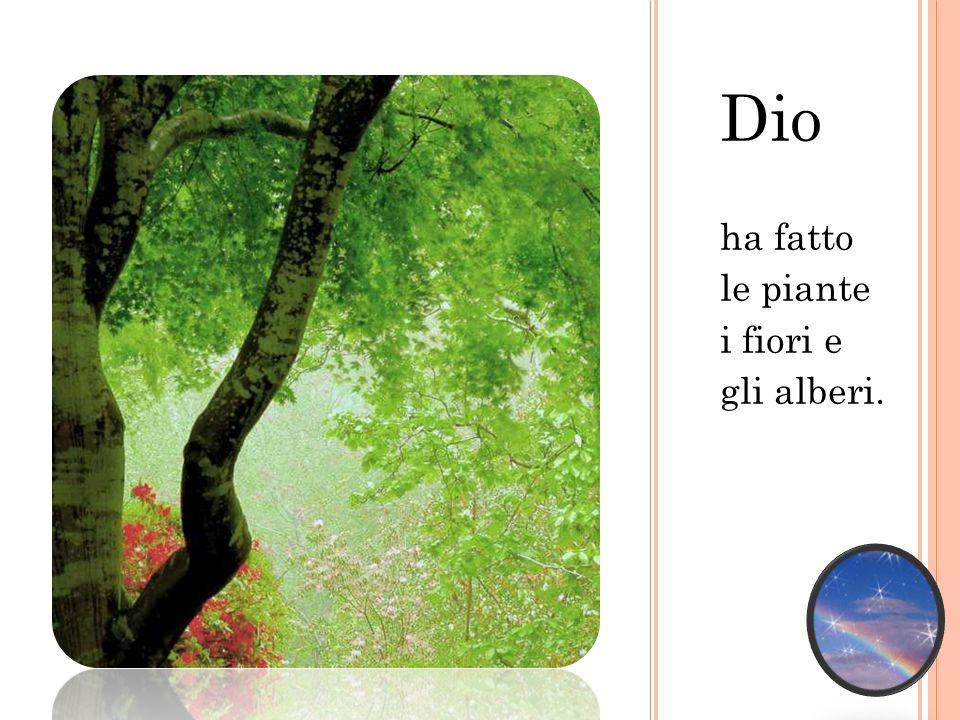 Dio ha fatto le piante i fiori e gli alberi.