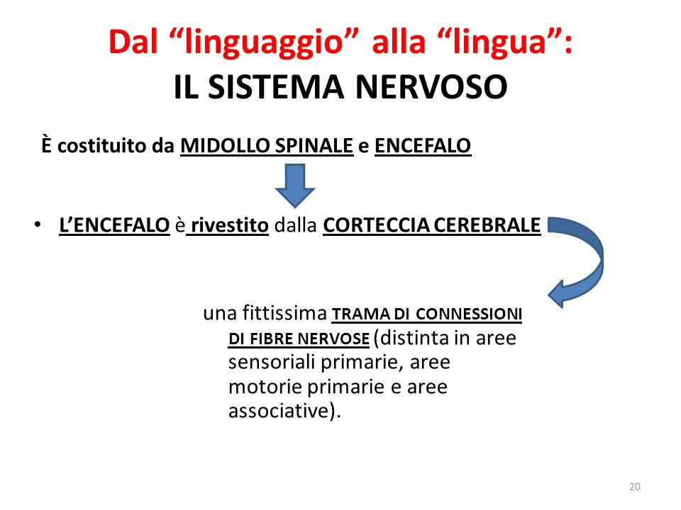 Dal linguaggio alla lingua: IL SISTEMA NERVOSO È costituito da MIDOLLO SPINALE e ENCEFALO 20 LENCEFALO è rivestito dalla CORTECCIA CEREBRALE una fitti