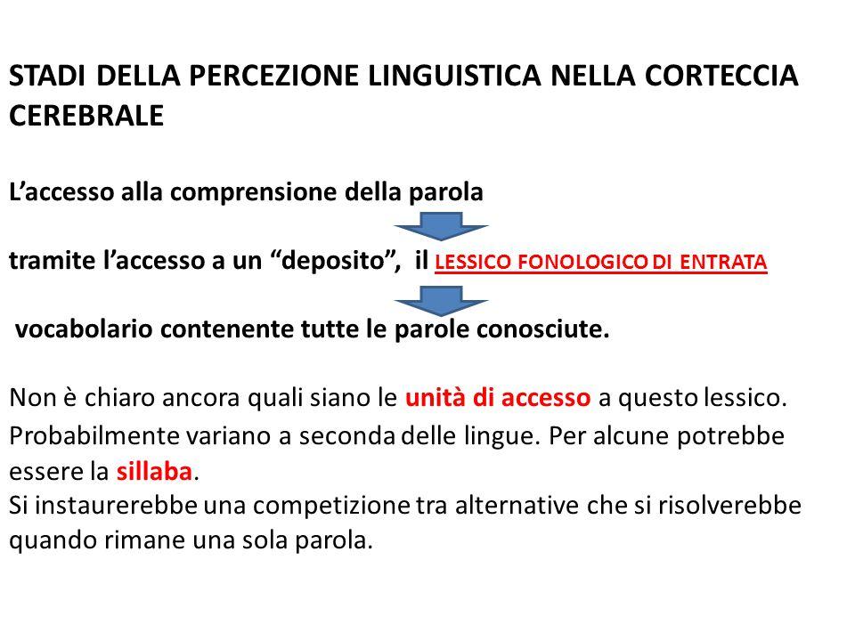 STADI DELLA PERCEZIONE LINGUISTICA NELLA CORTECCIA CEREBRALE Laccesso alla comprensione della parola tramite laccesso a un deposito, il LESSICO FONOLO