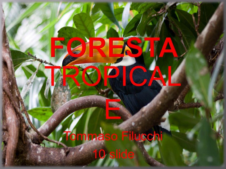 1-Localizzazione della foresta tropicale.2-Il clima.