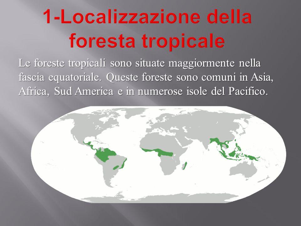 Le foreste tropicali sono situate maggiormente nella fascia equatoriale. Queste foreste sono comuni in Asia, Africa, Sud America e in numerose isole d