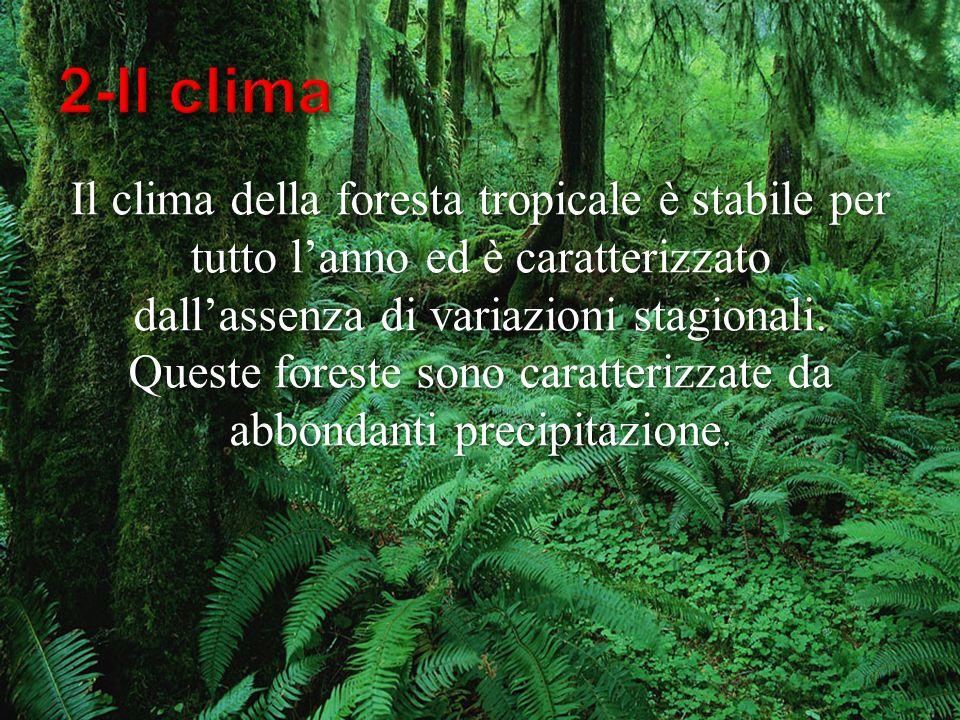 Il clima della foresta tropicale è stabile per tutto lanno ed è caratterizzato dallassenza di variazioni stagionali. Queste foreste sono caratterizzat