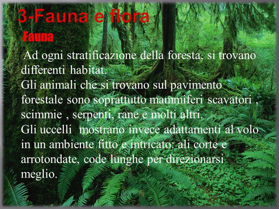 - Fauna Ad ogni stratificazione della foresta, si trovano differenti habitat. Gli animali che si trovano sul pavimento forestale sono soprattutto mamm