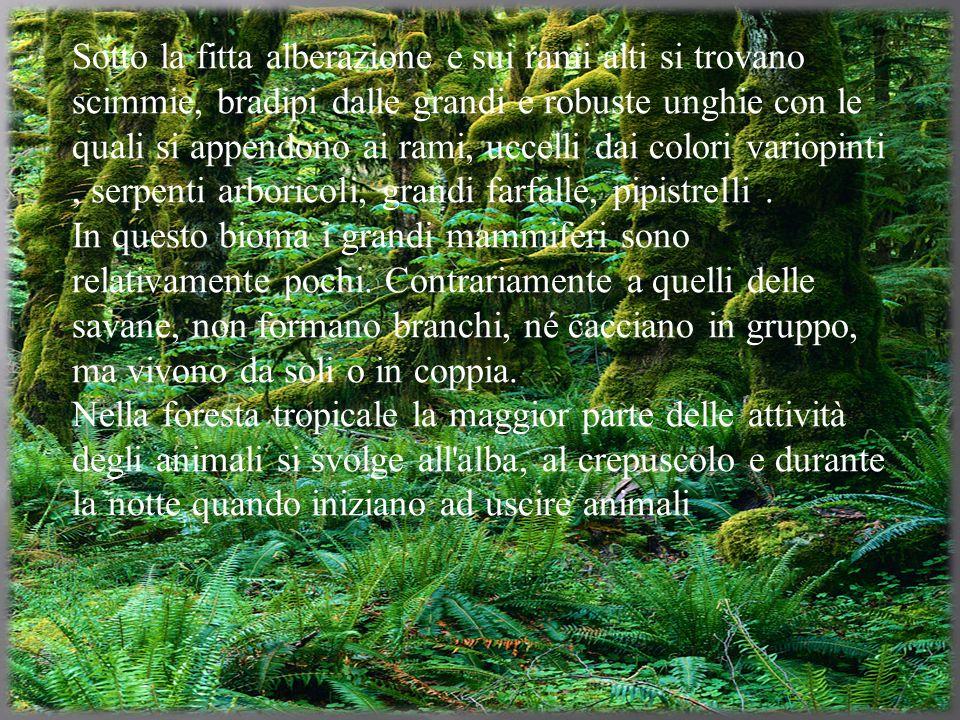 La vegetazione della foresta tropicale è molto fitta, per questo motivo non passa molta luce.