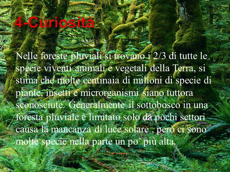 Nelle foreste pluviali si trovano i 2/3 di tutte le specie viventi animali e vegetali della Terra, si stima che molte centinaia di milioni di specie d