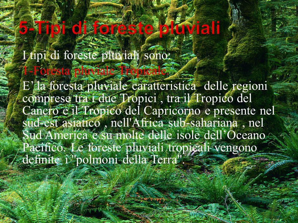 I tipi di foreste pluviali sono: 1-Foresta pluviale Tropicale. E la foresta pluviale caratteristica delle regioni comprese tra i due Tropici, tra il T